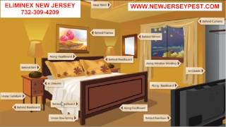 How do Bed Bugs in NJ get on your Bed and in your room 732-640-5488 Matawan New Jersey Exterminators