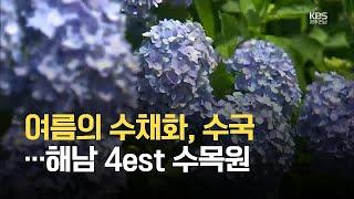 [영상] 여름의 수채화, 수국…해남 4est 수목원 /…