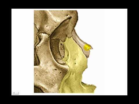 Huesos de la cara 1 - YouTube