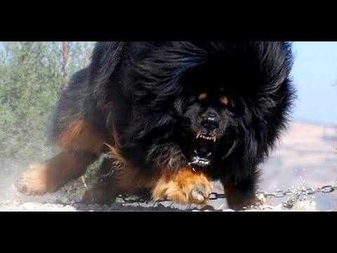ALL TYPE OF DOG BREEDS IN THE WORLD (PART - 2)