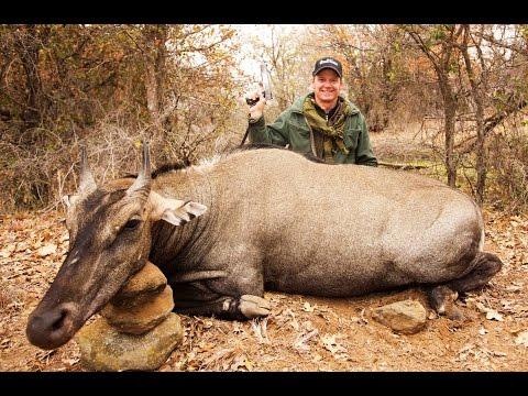 10mm Auto Giant Nilgai Antelope Hunt.  Razor Dobbs Handgun Hunting.