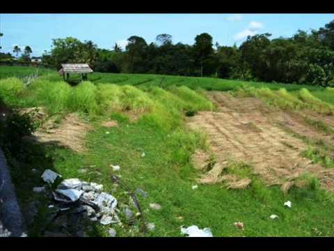 Bali land, for sale in canggu area - TJCG029.wmv