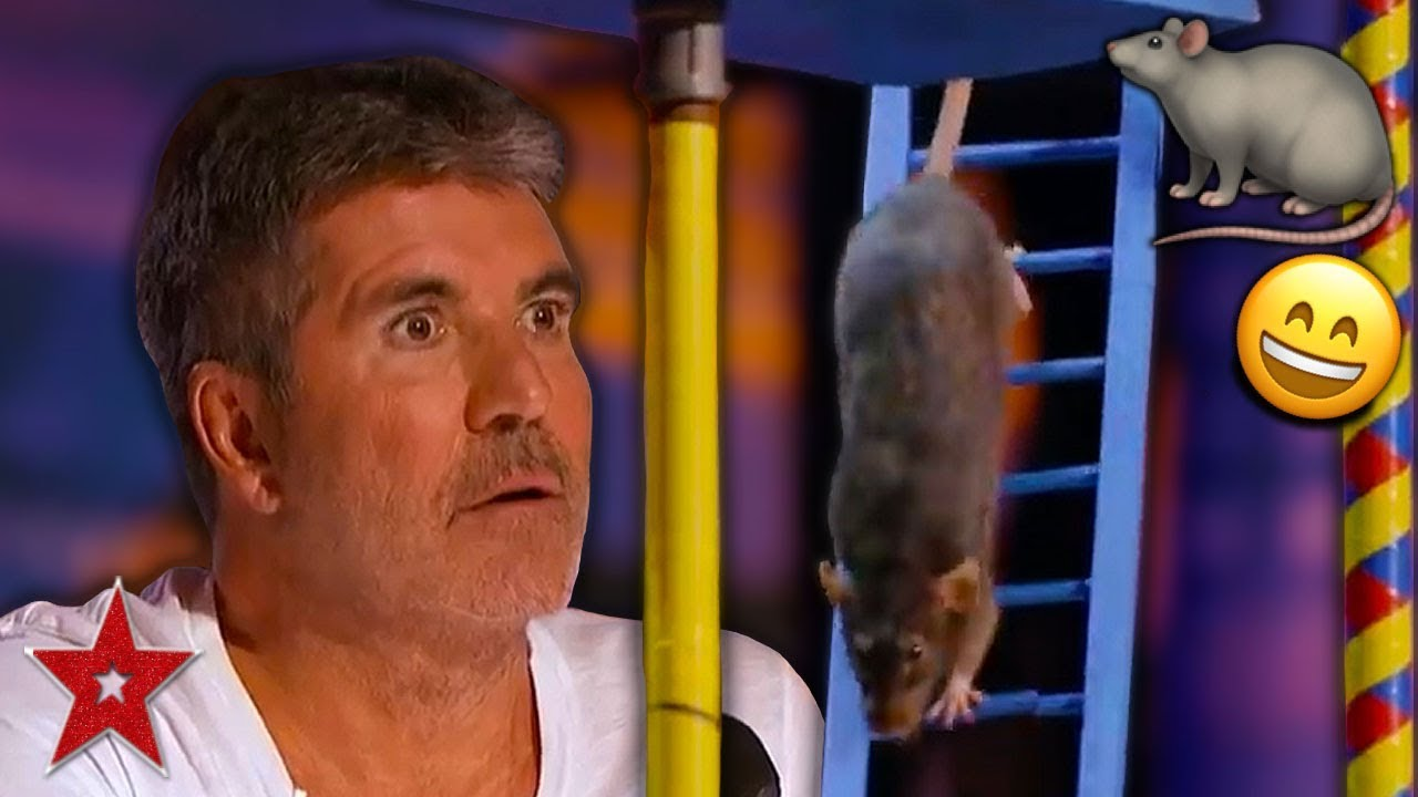 Download SMARTEST RAT In The World Surprises Everyone On America's Got Talent 2019! | Got Talent Global