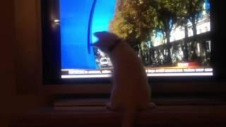 Amilli takima seninen ankara kedisi