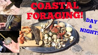 COASTAL FORAGING, Clams , Lobsters, Abalone , Cook up On The Beach!