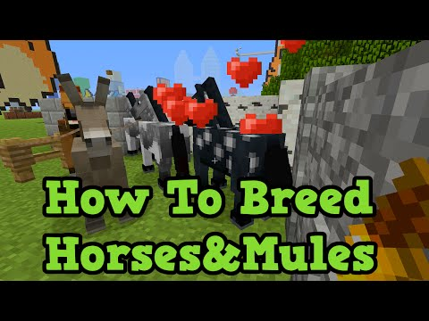 Minecraft Xbox 360 + PS3 How To Breed Horses and Mules in TU19