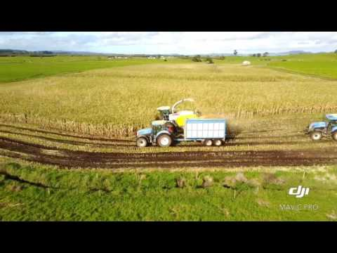 Maize 2017 Paul Ingram contracting - Bothwell Farms