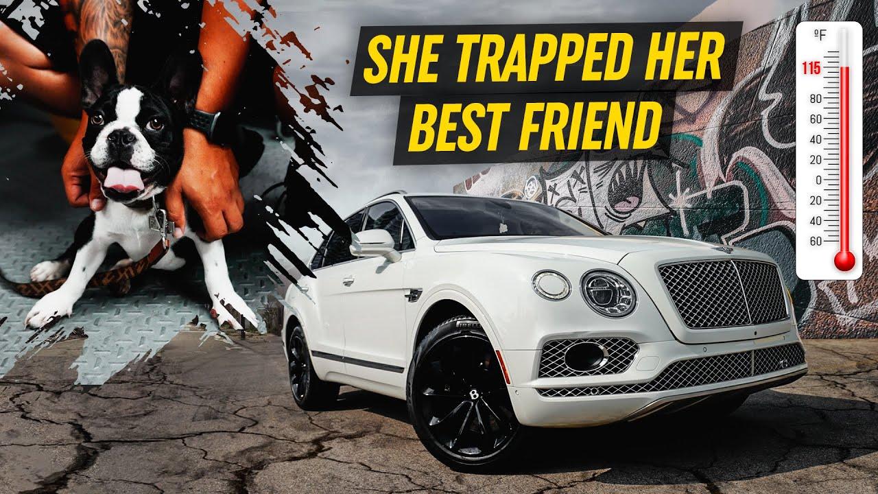 Bentley Driver Abandons Rare French Bulldog Inside Hot Car
