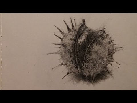Conker Speed Drawing YouTube