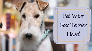 Wire Fox Terrier Pet Head | with Master Groomer