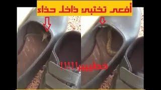 خطير! انظروا ماذا وجد هذا الشخص داخل حذائه