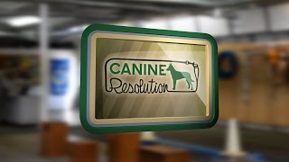Train Your Dog At Canine Resolution In Metro Detroit!