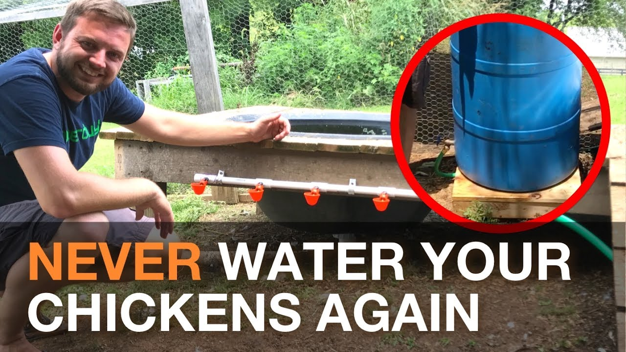 I Made An Automatic Chicken Watering System Gravity Fed