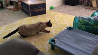 Cat Verses Scary New Tunnel