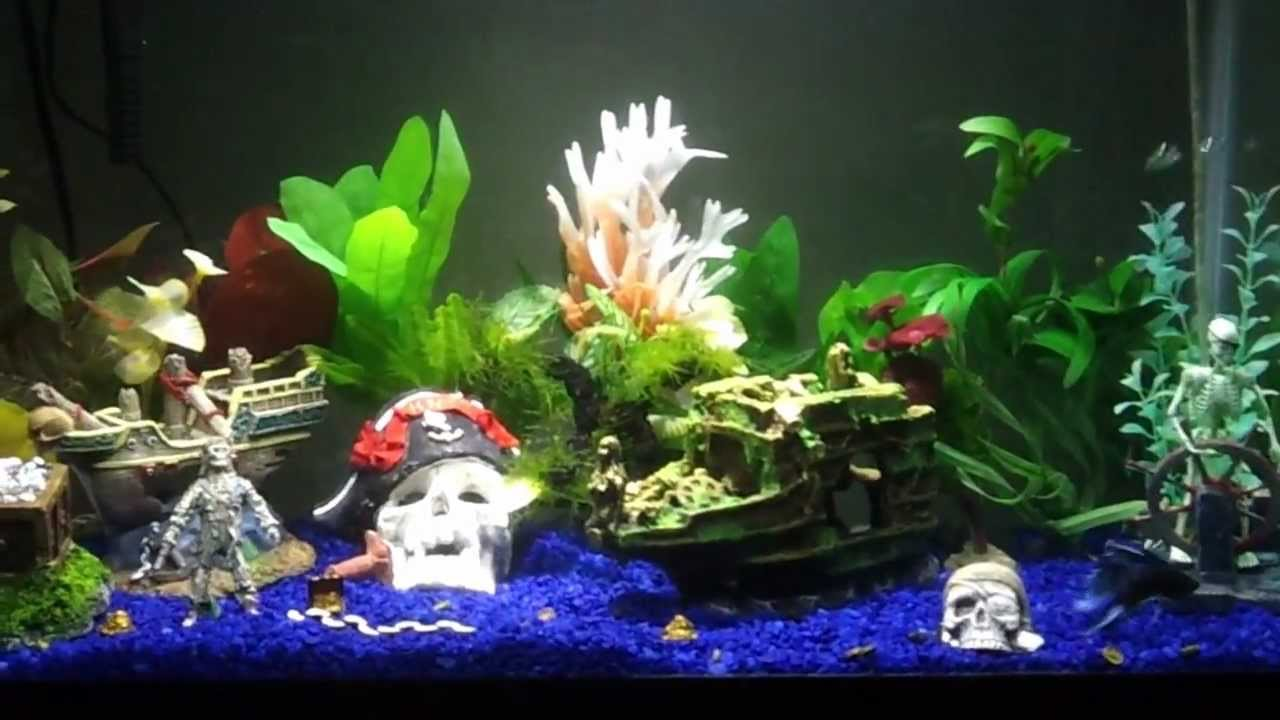 Pirate aquarium youtube for Fish tank pirate ship