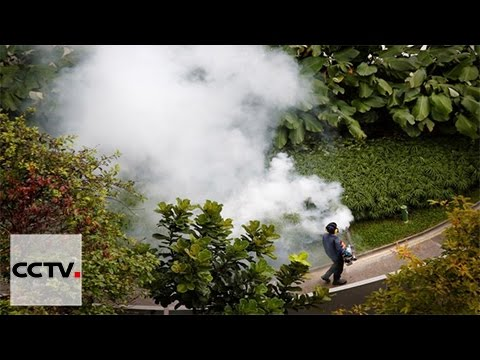 Asia countries fighting Zika
