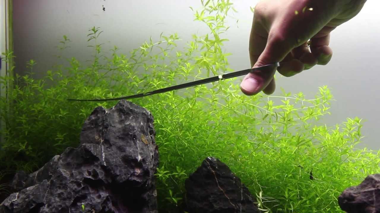 Green&Grey Aquarium - Day 29 - Trimming Hemianthus ...