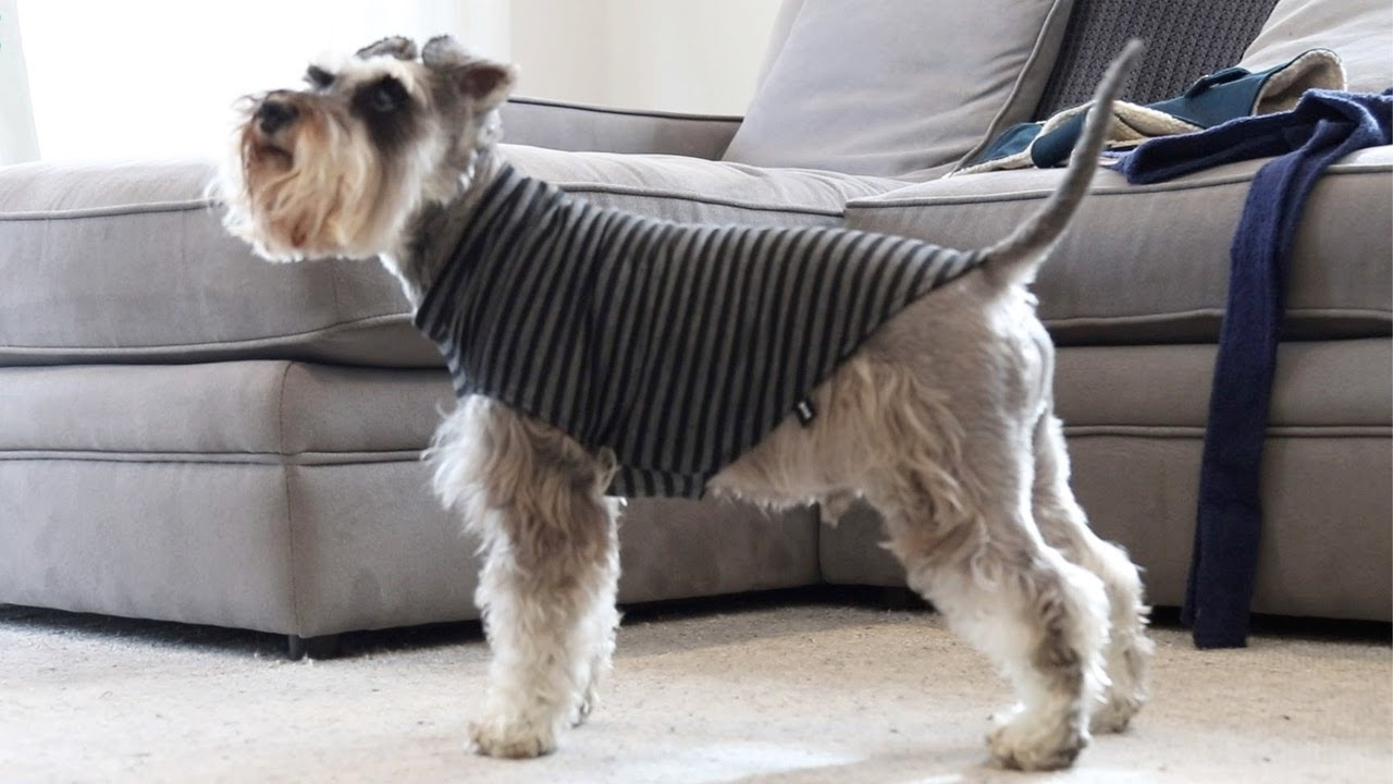 Animal Outfitters | Dog and Cat Accessories NZ online
