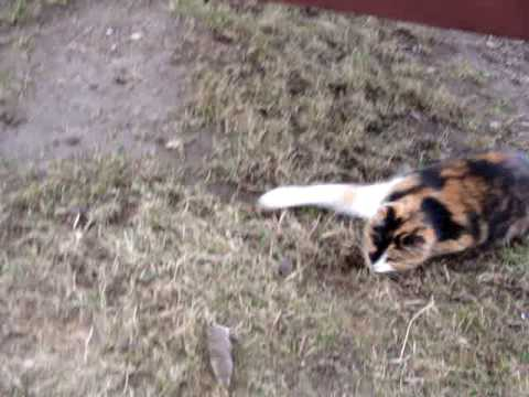 CAT FAIL CATCHING MOUSE