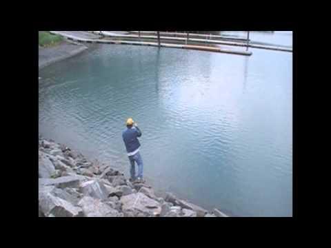 King Salmon Fishing In Seward Alaska - Tom Buchanan