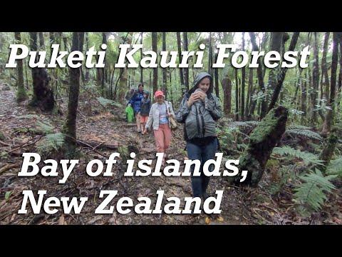 Easy Walk - Puketi Nature Trial, Bay Of Islands, New Zealand