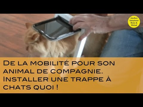 Installer Une Trappe  Chat  Youtube