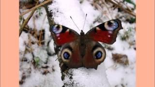 Раймонд Паулс Элегия Бабочки на снегу