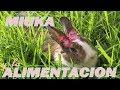 Miuca y la Alimentacion de los Conejos