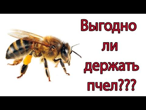 Богатый пчеловод ПРИБЫЛЬ ОТ ПЧЕЛОВОДСТВА