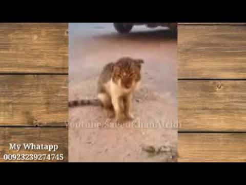 Very Funny Latest Whatsapp Videos Funny Clips Indian Pakistan Funny whatsapp Fun low