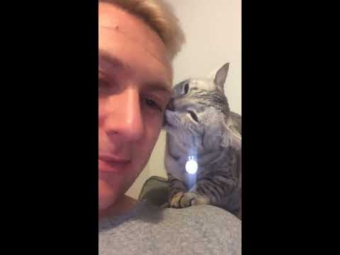 The worlds most affectionate cat! Solo saying he is sorry.