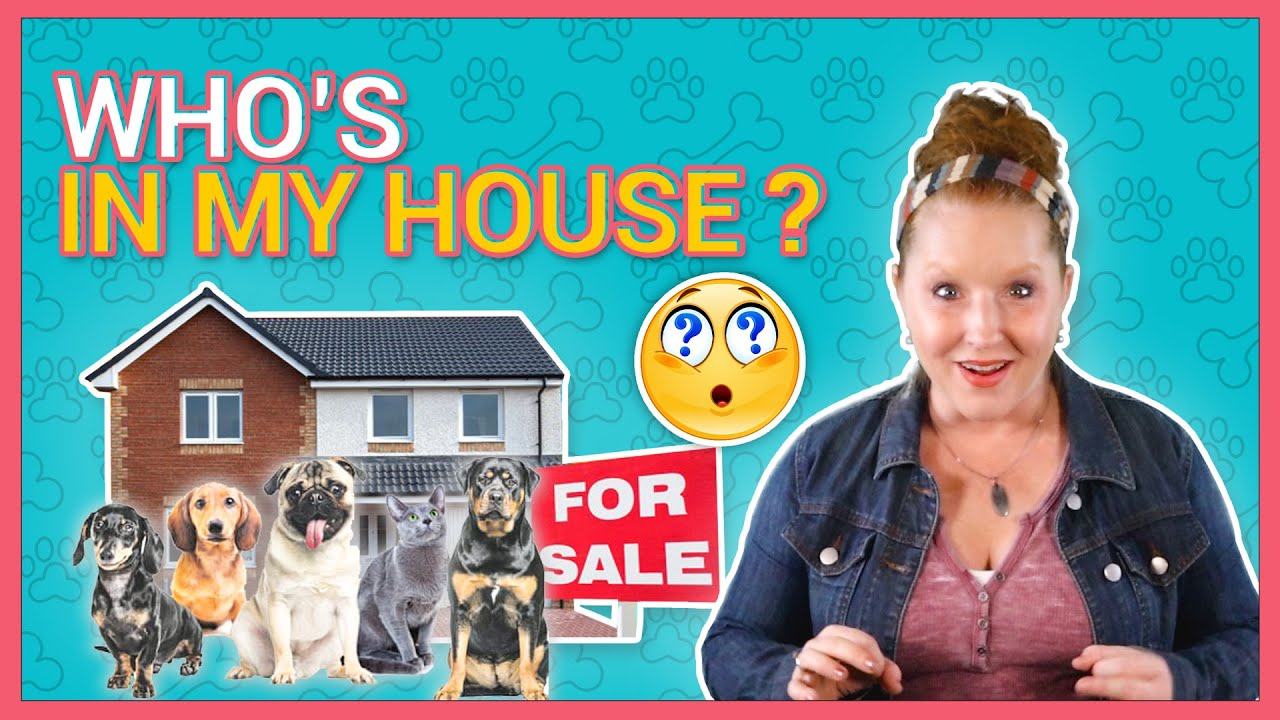 What to do With Pets When Selling Your House-2020- Billerica, MA