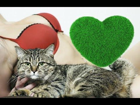 Массаж живота коту