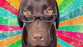 Самая умная собака. Подборка 2015