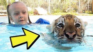 Das Kind SPIELT mit dem TIGER, was dahintersteckt ist …