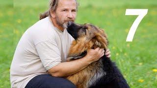 [Урок 7] Как научить щенка команде СИДЕТЬ