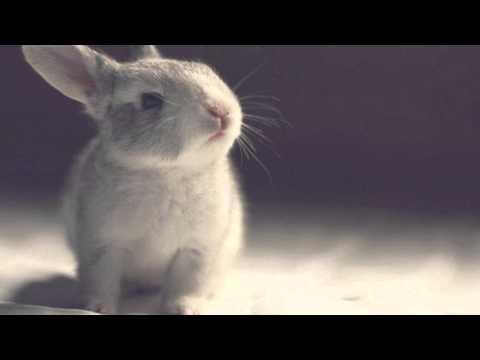 Клип Jackson Waters - One More Day