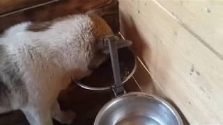 видео Акана корм для собак (Acana), отзывы
