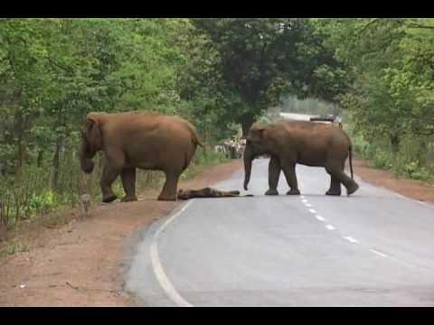 Jindal Says No Elephants