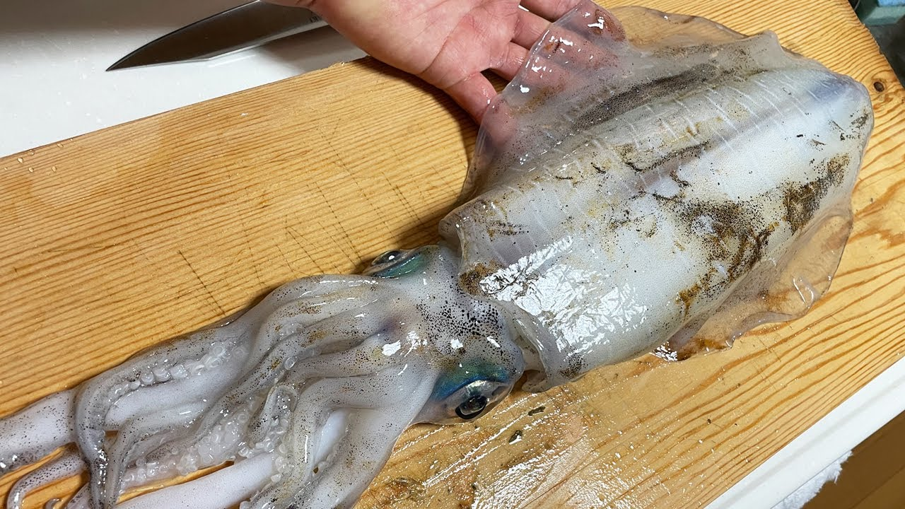 【今が旬】巨大春イカの捌き方・肝付き