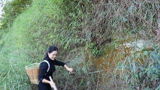 【南方小蓉】獨居女孩攀懸崖采奇花異草A girl was found picking exotic flowers and weeds on a cliff in the deep mountains