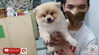 CARTIMAR PETSHOP DOGS PRICELIST PART2 LATEST UPDATE MARCH 2021.vlog#165