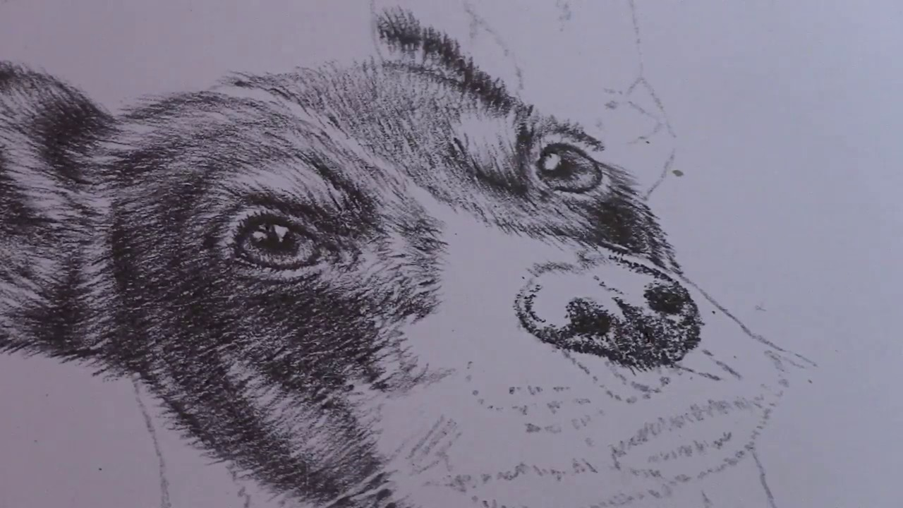 How To Draw A Realistic Dog Nose  Realistic Pencil Drawings  Remrov