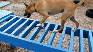 Astro Kennels Agility Course For Dogs