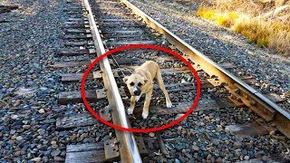 man-spots-animal-tied-to-a-railway-track-he-faced-a-race-against-time-to-try-and-save-him