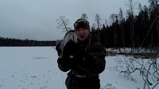 вдала рибалка на жерлицы і копканы . successful fishing on imitation fish and trap