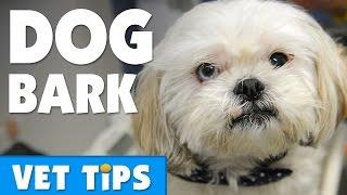 Does Your Dog Bark? | Bondi Vet