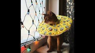 Защитный воротник для кошек Freddy's Friends Brand