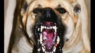 Топ 10 самых ЗЛЫХ собак в мире