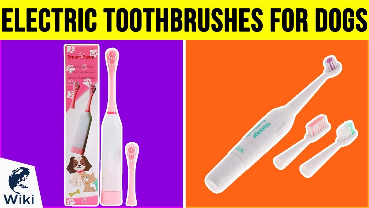 5 Best Electric Toothbrushes For Dogs 2019